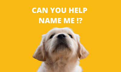 Can you help us name this Dogs for the Disabled pup?